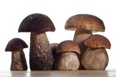 Wild Mushrooms. Studio shoot of wild mushrooms on the kitchen desk with white background Royalty Free Stock Photo