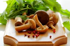 Wild mushrooms. Stock Image