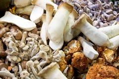 Wild mushrooms. Variety of fresh natural and wild mushrooms Stock Photography