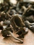 Wild Mushrooms Royalty Free Stock Photography