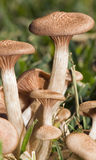 Wild mushrooms Stock Photos