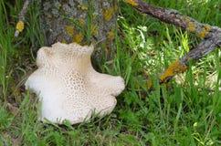 Wild mushrooms in autumn Stock Images