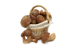 Wild mushrooms in a basket on a white background Royalty Free Stock Photo