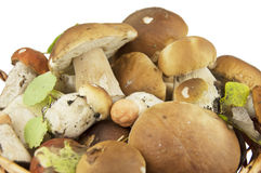 Wild mushrooms in a basket Royalty Free Stock Image