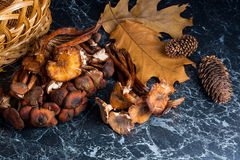 Wild mushrooms on black marble background. Stock Image