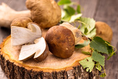 Wild mushrooms.Cep Stock Image