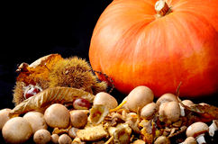 Wild mushrooms chestnuts and pumpkin on black. Wild mushrooms with chestnuts and orange pumpkin on black background Royalty Free Stock Images