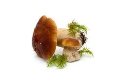 Wild mushrooms close up on white background Royalty Free Stock Photography