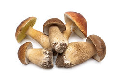 Wild mushrooms closeup isolated on white background Stock Photography