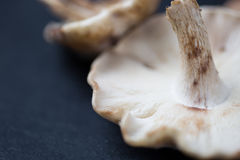 Wild mushrooms closeup. Closeup shot of fresh wild mushrooms Royalty Free Stock Photos