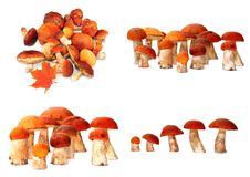 Wild mushrooms. collage Stock Images