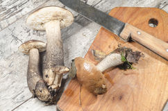 Wild mushrooms on cutting board Royalty Free Stock Photo