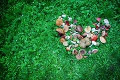 Wild mushrooms displayed in heart shape Stock Photo