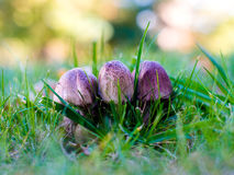 Wild mushrooms on the forest edge Stock Images