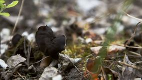 Wild mushrooms in forest stock footage