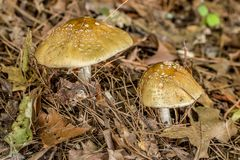 Wild mushrooms in forest stock image