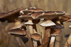 Wild mushrooms in forest on a sunny autumn day Royalty Free Stock Images