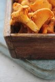 Wild mushrooms Stock Image