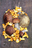 Wild mushrooms Royalty Free Stock Images