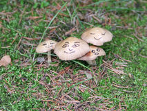 Wild mushrooms with funny face Royalty Free Stock Photo