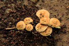 Wild mushrooms with funny face Stock Image