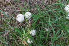 Wild mushrooms on grass Stock Photos