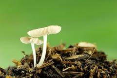 Wild mushrooms on ground. Stock Image