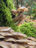 Wild mushrooms Stock Image