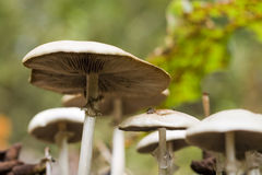 Wild Mushrooms. Insect point of view of wild mushrooms growing in woodlands royalty free stock image