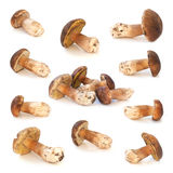 Wild mushrooms isolated on white background Royalty Free Stock Photos