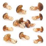 Wild mushrooms isolated on white background. Wild mushrooms isolated on white Royalty Free Stock Photos
