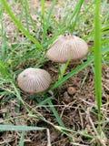 Wild mushrooms maybe poisoning stock photos
