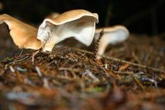 Wild mushrooms Stock Images