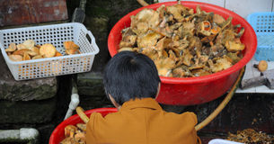 Wild Mushrooms for Sale Stock Images