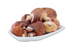 Wild mushrooms Suillus lie stacked in a container for food of fo Stock Image