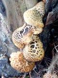 Wild mushrooms. On a tree Stock Photo