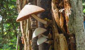 Wild mushrooms on an tree Stock Photo