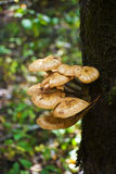 Wild mushrooms on the trunk of an old tree Stock Photos
