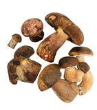Wild mushrooms on white background. Close-up Royalty Free Stock Images