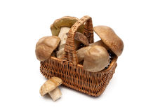 Wild mushrooms in a wicker basket on a white background. Horizontal photo Stock Photo