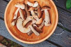 Wild mushrooms on wooden plate Stock Photos