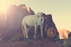 Wild mustang horse glazing in desert Stock Images