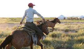 Wild Mustang roundup Royalty Free Stock Images