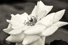 Wild nam bloem toe Royalty-vrije Stock Foto's