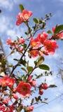 Wild nam bloemen toe Stock Fotografie