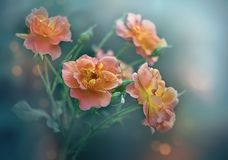 Wild nam bloemen toe royalty-vrije stock foto