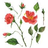 Wild nam bloemen toe stock illustratie