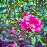 Wild nam in een tuin toe royalty-vrije stock foto