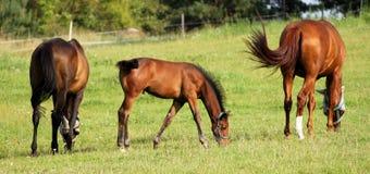 wild natur för familjhästlivstid Arkivfoto