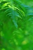 Grön ormbunksbladnärbild i solig skog Arkivfoton